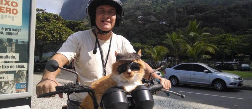Il gatto motociclista, come portare Garfield in giro con la moto