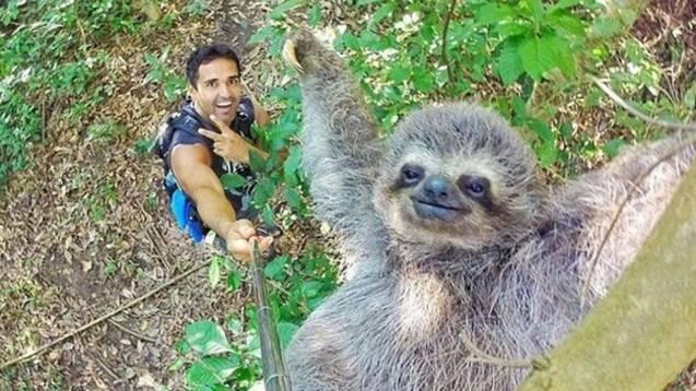Un bradipo è la nuova stella del web, grazie a un selfie