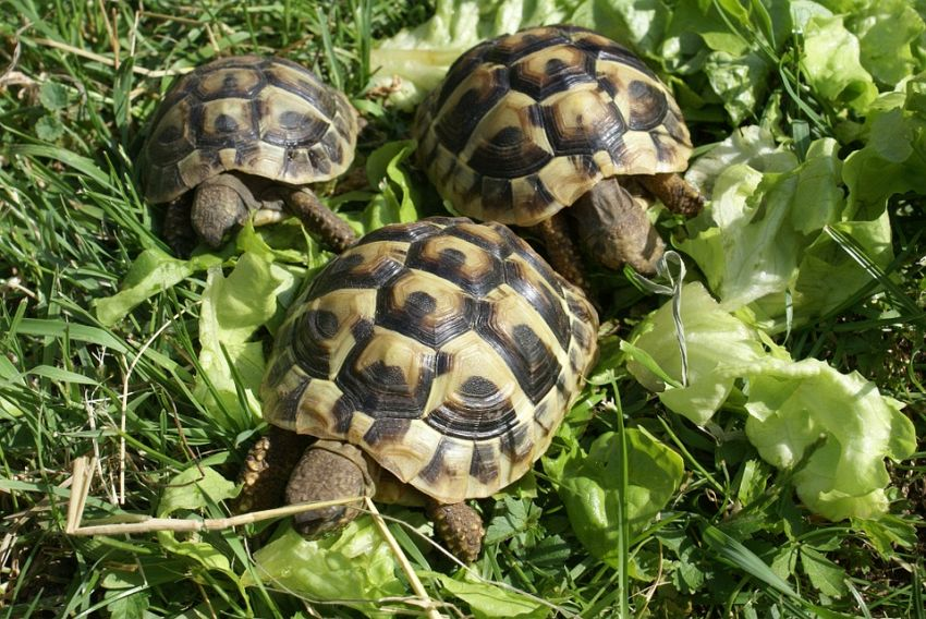 Animali per bambini da tenere in casa: da volatili a rettili