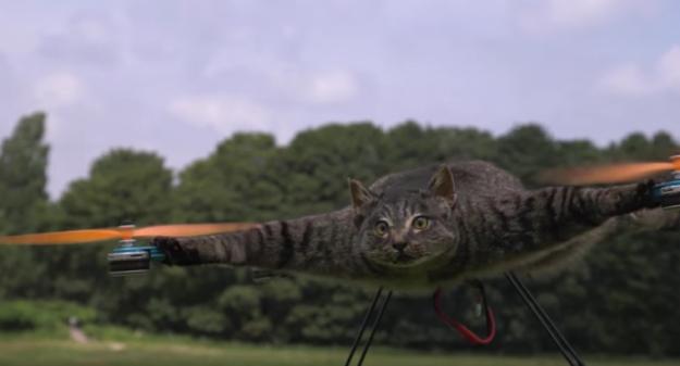 Animali imbalsamati e droni volanti, non c'è limite al peggio