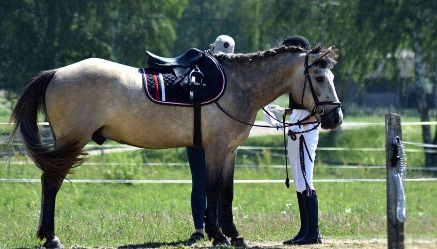 Equitazione - Olimpiadi Rio 2016: calendario completo ed orari italiani