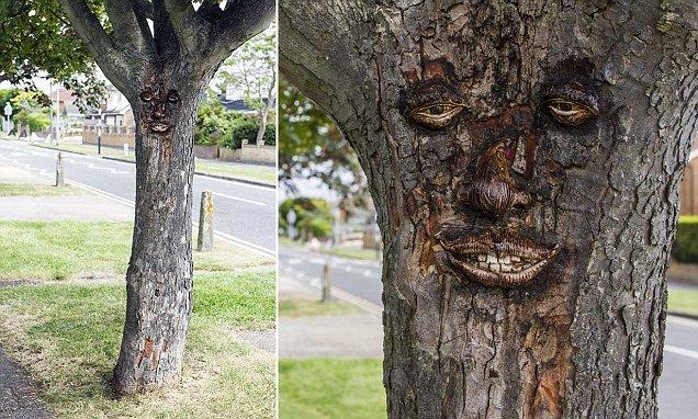 Caccia all'artista misterioso che scolpisce le cortecce degli alberi