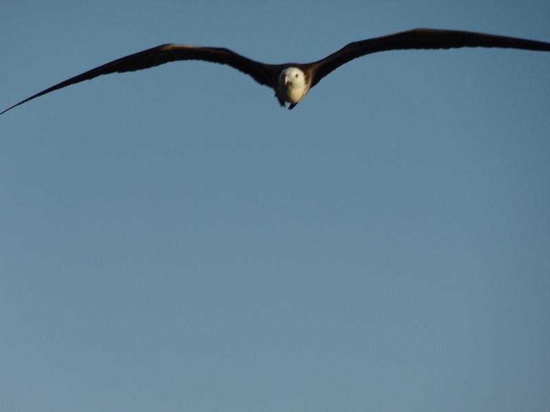 Gi uccelli possono dormire mentre volano, ecco come fanno