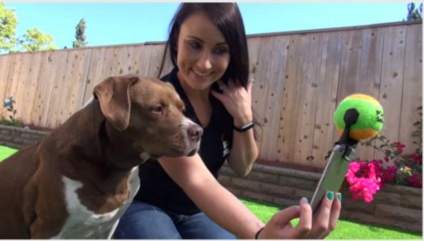 Pooch selfie, l'accessorio per scattare i migliori selfie con il tuo cane