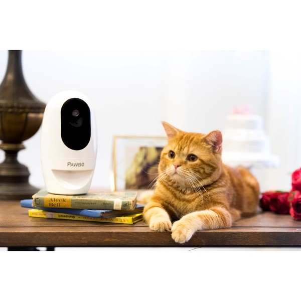 Pawbo, una nuova webcam per animali domestici