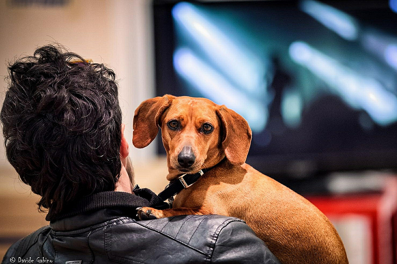 Che cosa vedono i cani quando guardano la tv? Ve lo dice la scienza