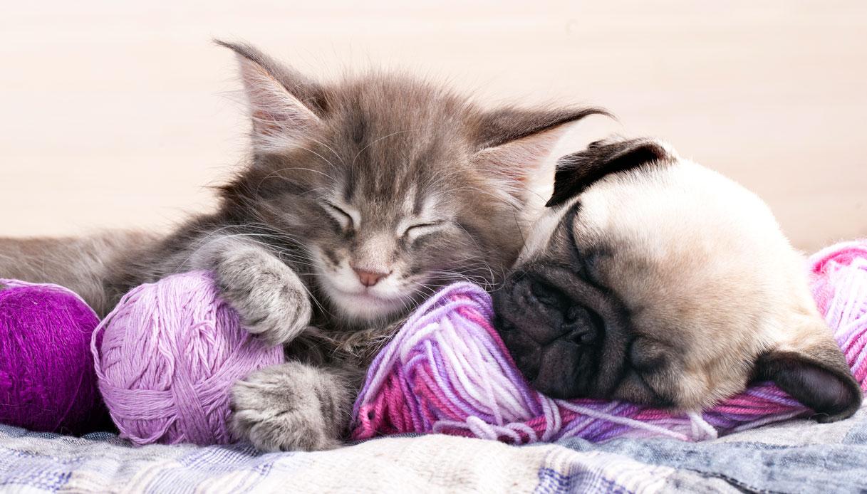 Sogni Da Cani E Gatti I Nostri Animali Domestici Ci Pensano Anche