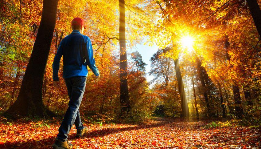 Forest-bathing: curarsi passeggiando nel bosco. Lo dice la scienza