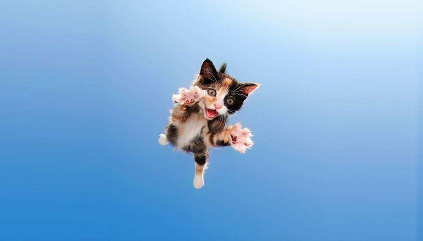 Ecco i gatti volanti che aiutano le adozioni