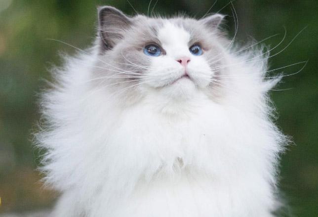 Immagini per profilo whatsapp gatti