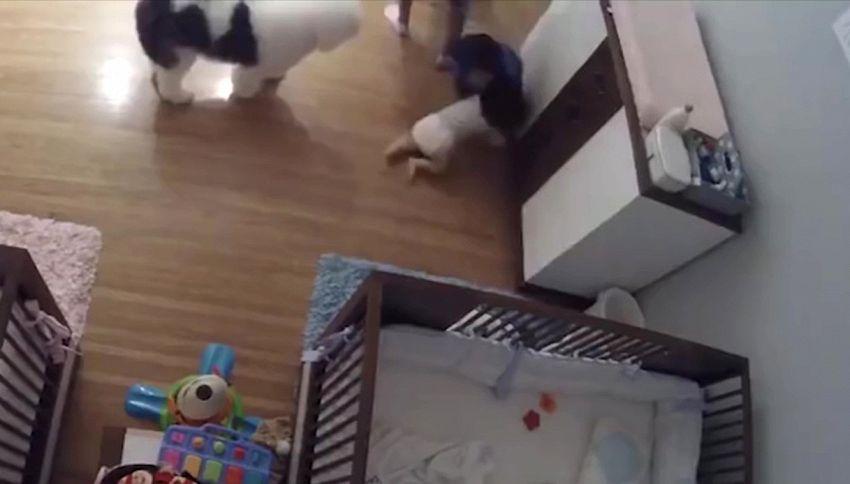 Bambino fenomeno: salva il fratellino prendendolo al volo