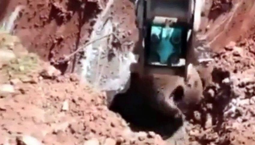 L'orso intrappolato sfida la scavatrice meccanica