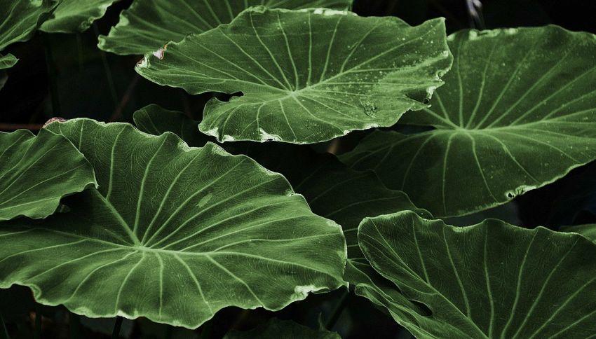Le migliori piante per purificare l'aria di casa, parola di NASA