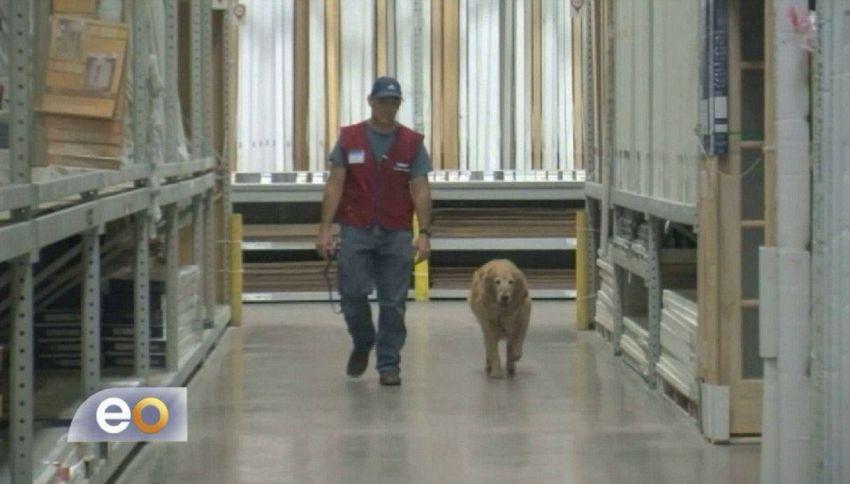 Può lavorare solo con il cane: l'azienda assume entrambi