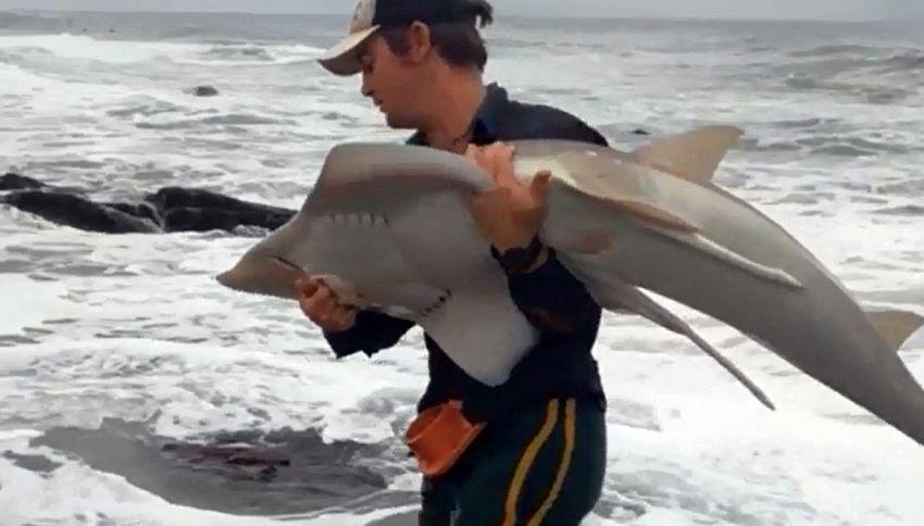 Pesca per sbaglio uno squalo: lo 'riaccompagna' in mare