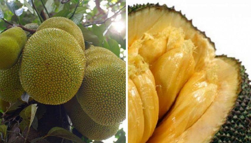 Ecco jackfruit, il frutto che sfamerà il mondo