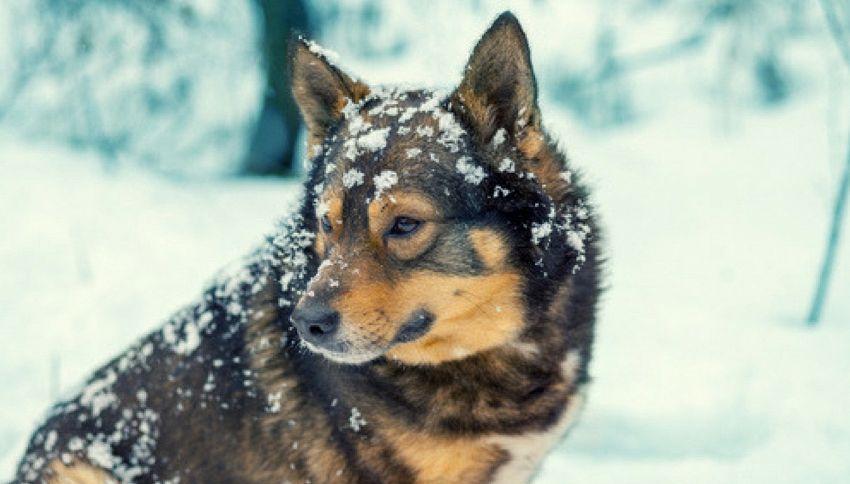"""Ecco perché si dice: """"Fa un freddo cane"""""""