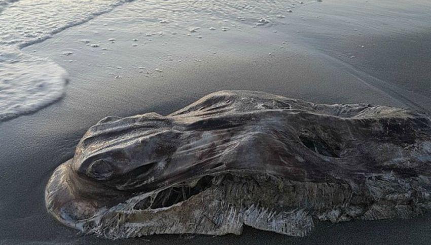 La misteriosa creatura del mare apparsa in Australia