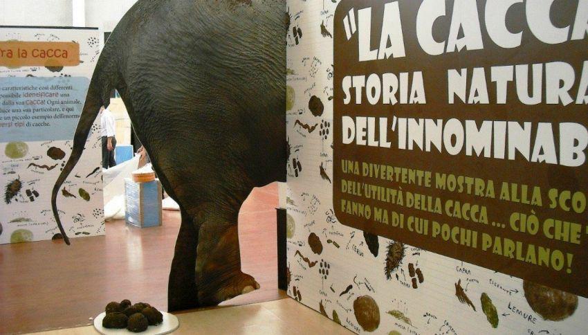 Il bioparco di Roma mette in mostra la cacca