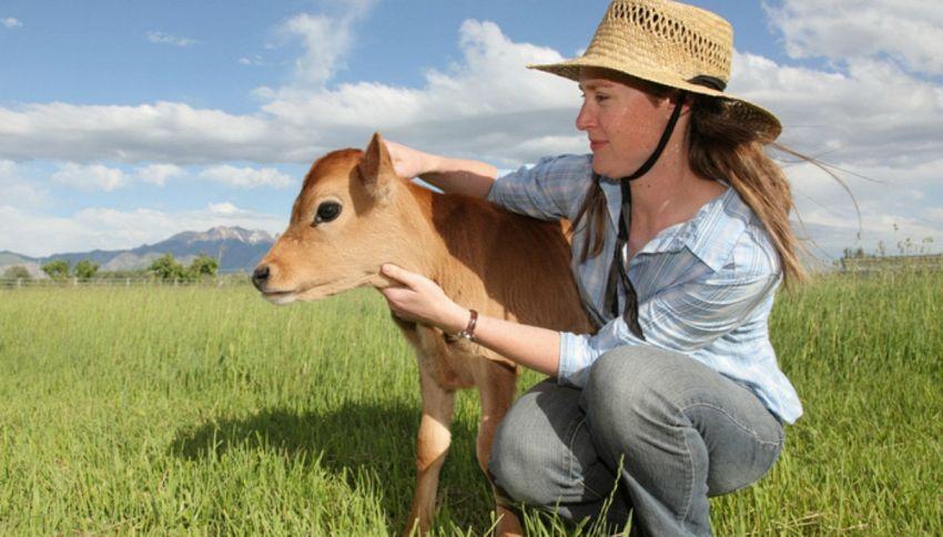 La mucca terapia per combattere lo stress