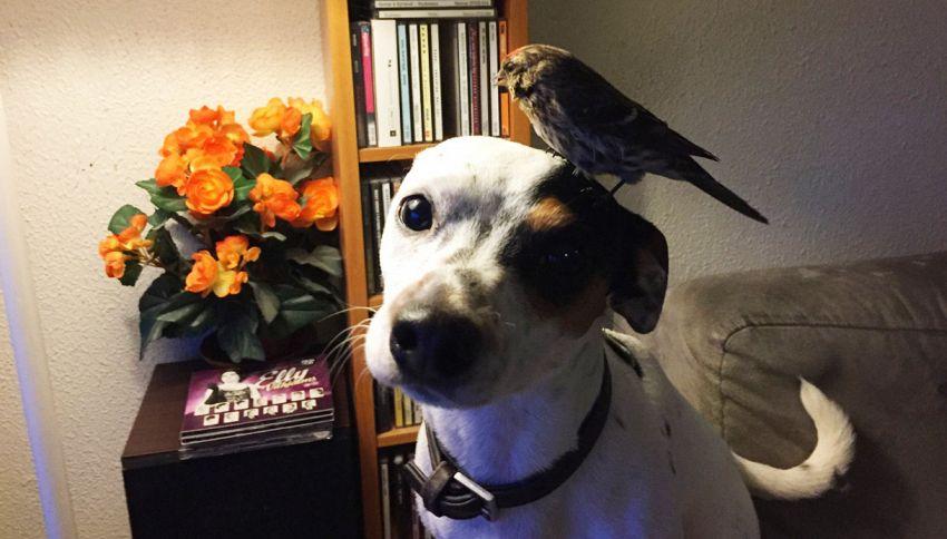 Il passerotto e il cane che l'ha salvato. La foto è virale