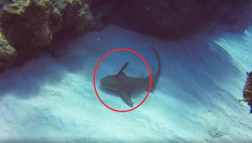 Lo squalo ha un coltello conficcato in testa, il sub lo salva