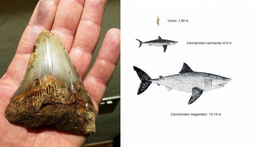 Scoperto dente di squalo preistorico alto come palazzo di 6 piani