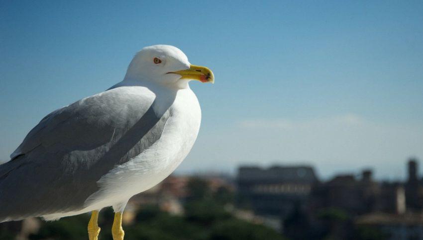 Comune di Roma, foto con gabbiano su FB e gli utenti si indignano