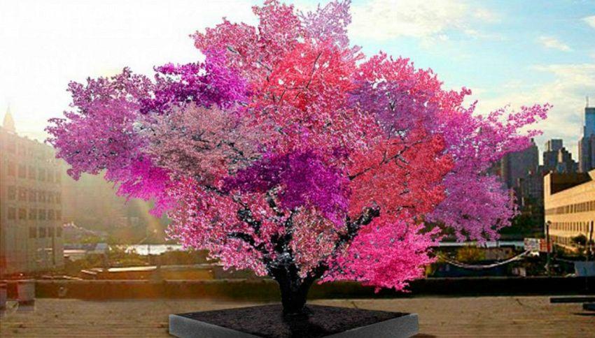 L'albero magico che produce 40 tipi di frutta