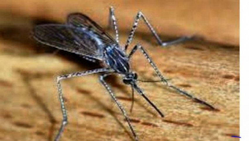 Che fine fanno le zanzare d'inverno?