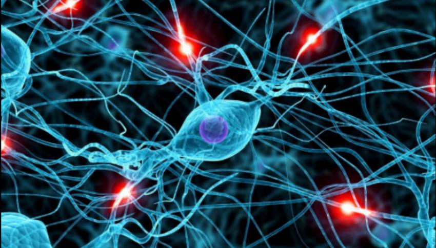 Scoperti 40 geni legati all'intelligenza
