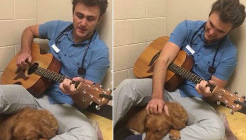 Il veterinario canta la serenata al cane prima dell'intervento