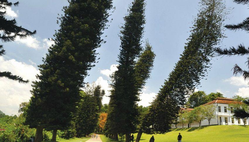 Svelato il mistero degli alberi che pendono verso l'equatore