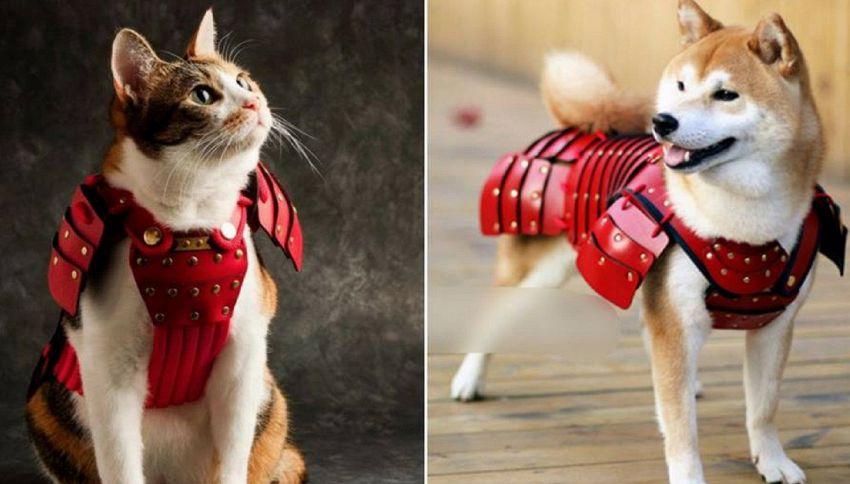 Armature per cani e gatti: l'idea di una società giapponese