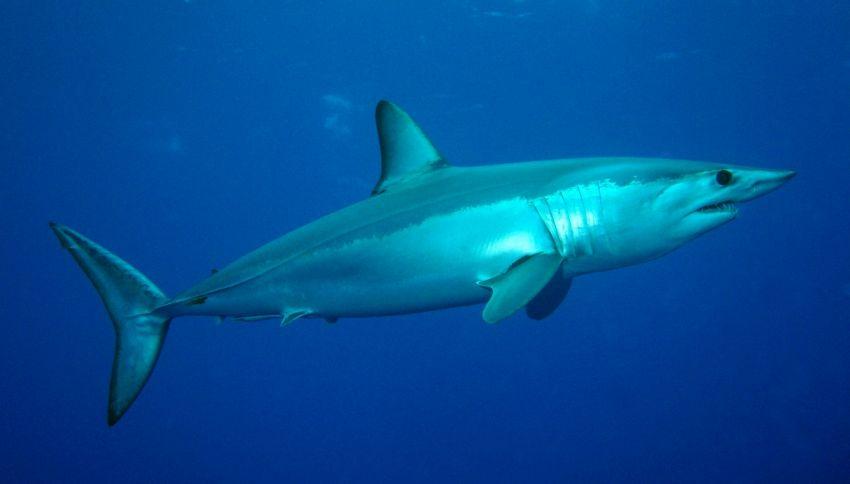 I 7 squali più pericolosi del Mediterraneo