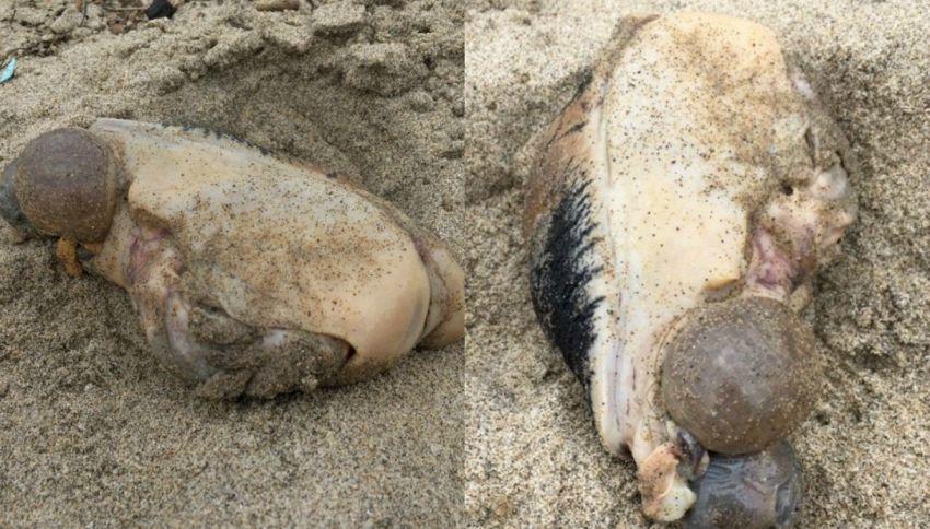 Trovata sulla costa una misteriosa creatura marina