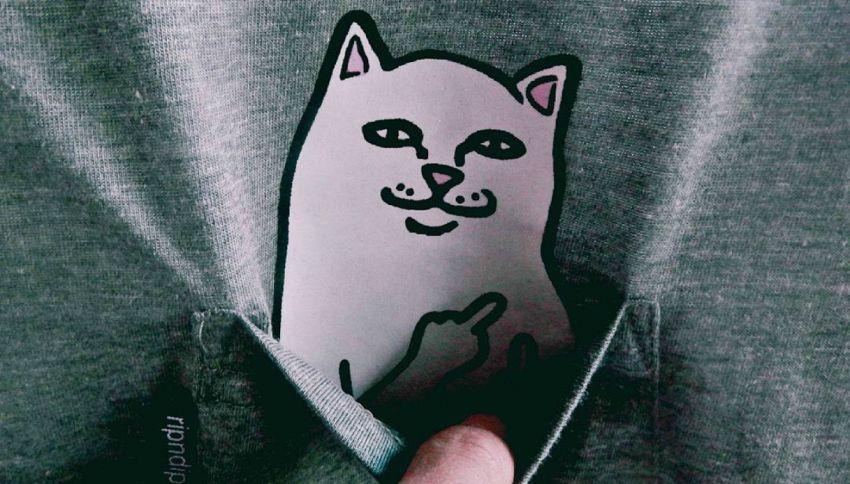 Lord Nermal, il gatto delle t-shirt che ti manda a quel paese