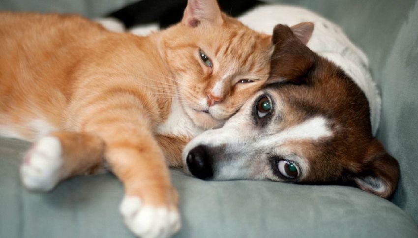 Usa, arriva l'avvocato per cani e gatti