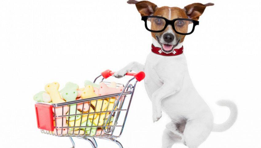 Quando fido aiuta a fare la spesa. Il cane spinge il carrello