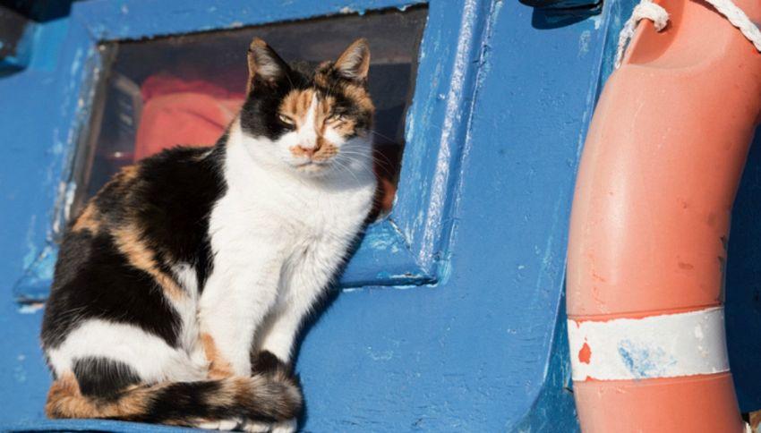 Cat Boat: ad Amsterdam la barca che ospita i gatti randagi