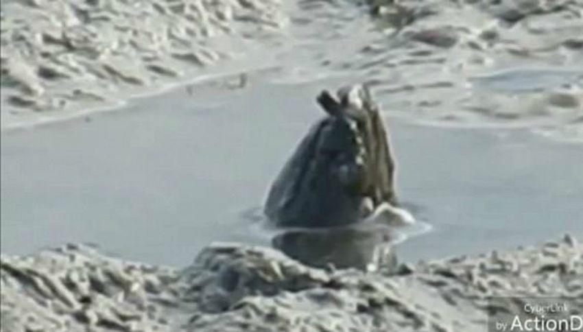 Una strana e inquietante creatura emerge dall'acqua, poi scompare