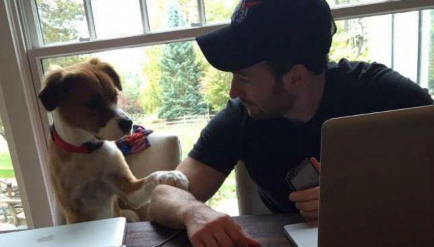 Chris Evans torna a casa dopo 2 mesi, il tenero saluto del cane