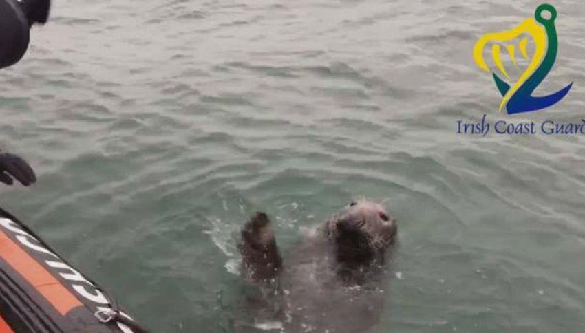Irlanda, la foca saluta con la zampa la Guardia Costiera