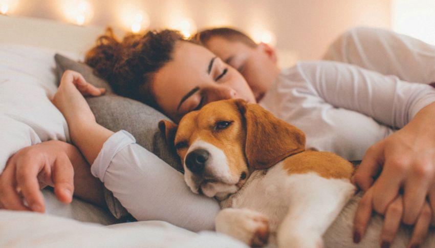La gente ama più i cani delle persone. Lo dice la scienza