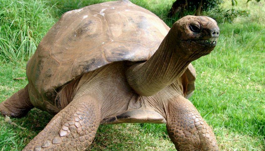 Vi presentiamo Jonathan: la tartaruga più vecchia del mondo