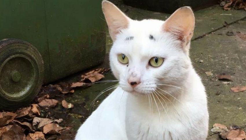 La storia di Gary, il gatto con le sopracciglia