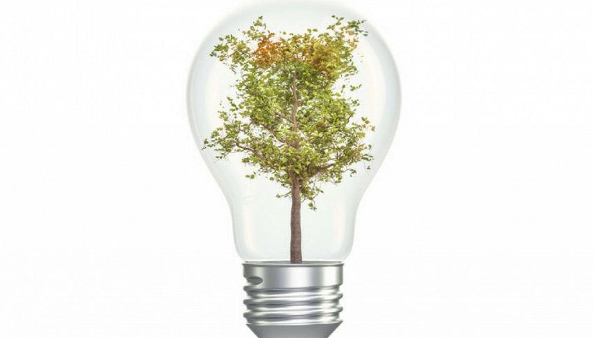 La magia delle piante che funzionano come lampade