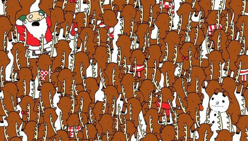 Trova l'orso fra le renne: il nuovo rompicapo delle feste