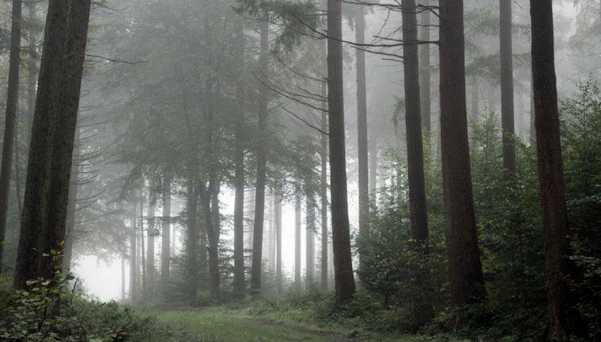 La nebbia friulana in barattolo va a ruba in Usa e Inghilterra