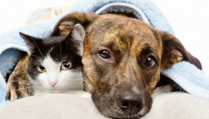 Destro o mancino? Scopri com'è il tuo gatto o il cane